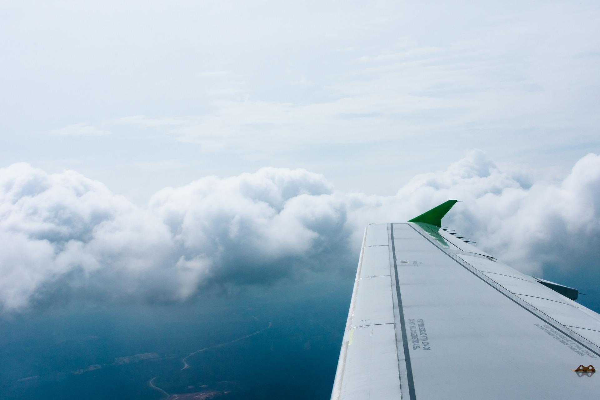fly-869595_1920